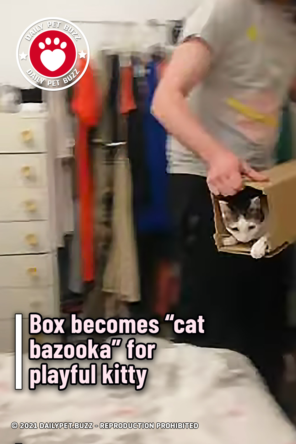 """Box becomes """"cat bazooka"""" for playful kitty"""