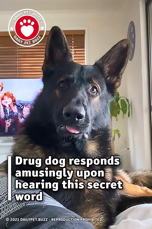 Drug dog responds amusingly upon hearing this secret word
