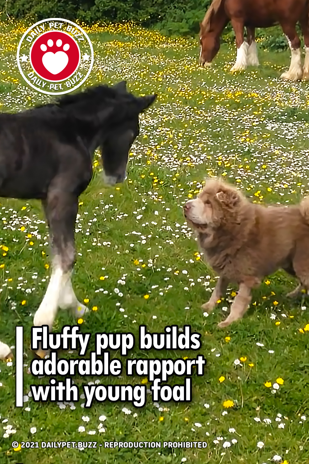 Fluffy pup builds adorable rapport with young foal