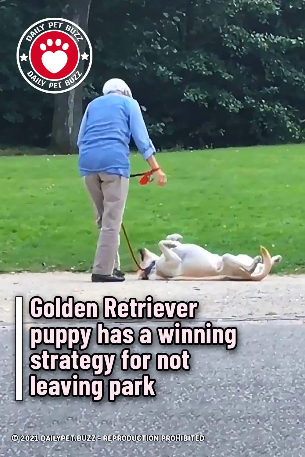 Golden Retriever puppy has a winning strategy for not leaving park