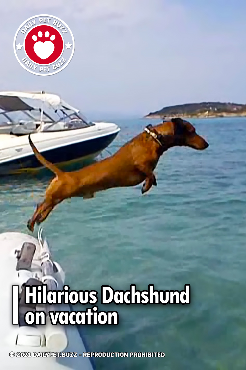 Hilarious Dachshund on vacation