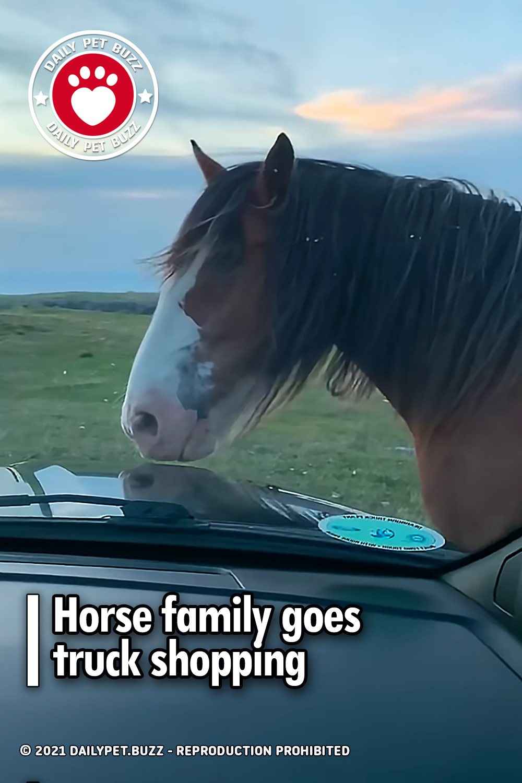 Horse family goes truck shopping