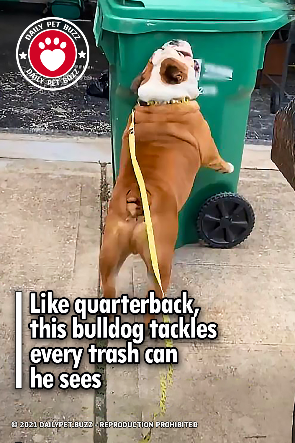 Like quarterback, this bulldog tackles every trash can he sees