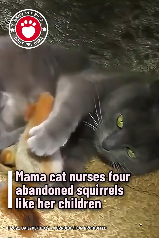 Mama cat nurses four abandoned squirrels like her children