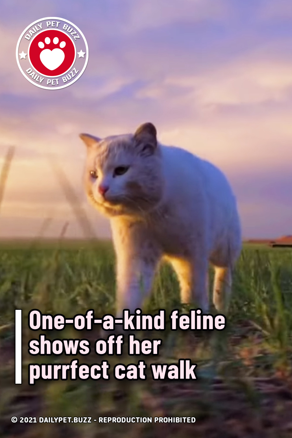 One-of-a-kind feline shows off her purrfect cat walk