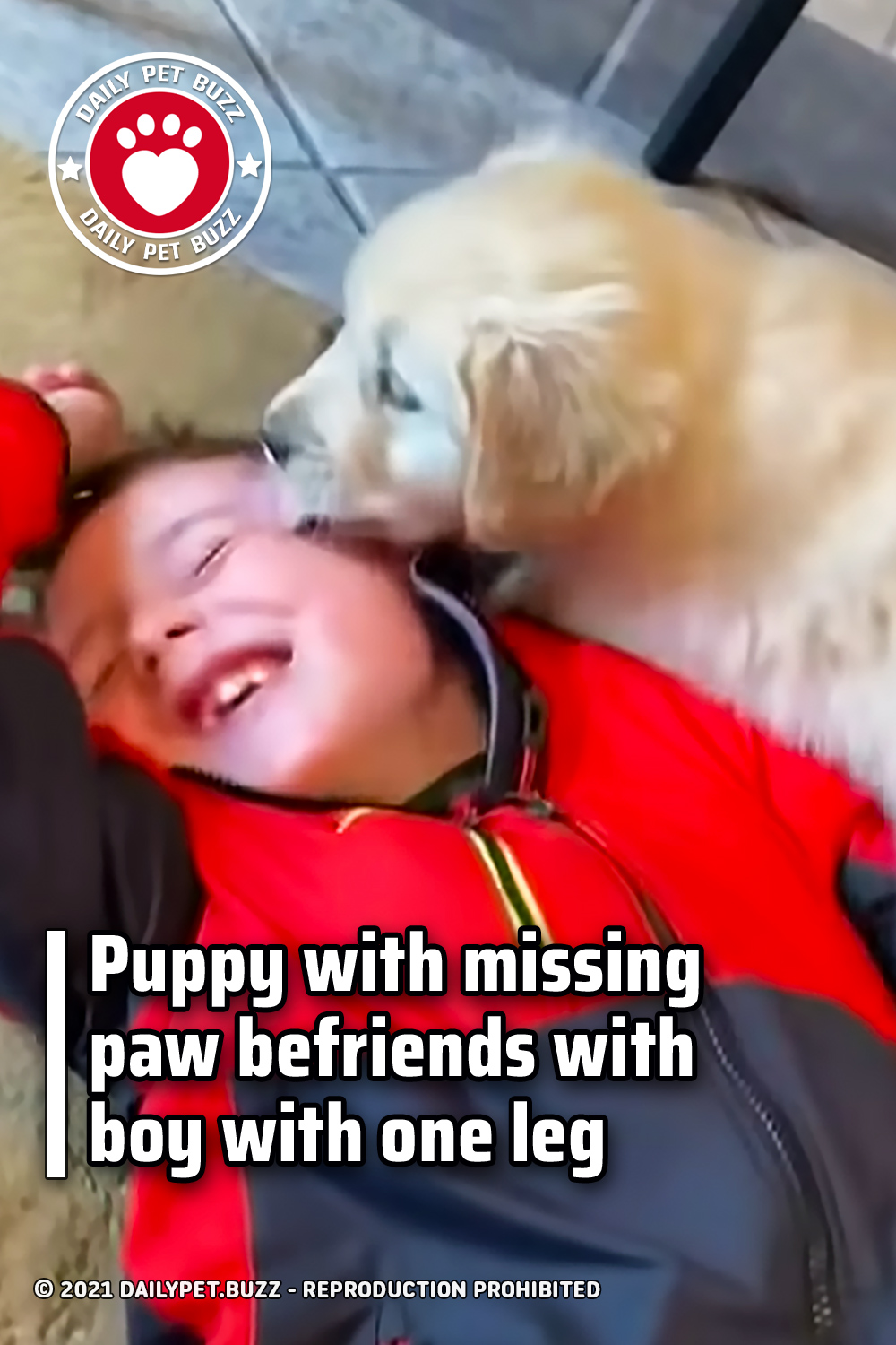 Puppy with missing paw befriends with boy with one leg