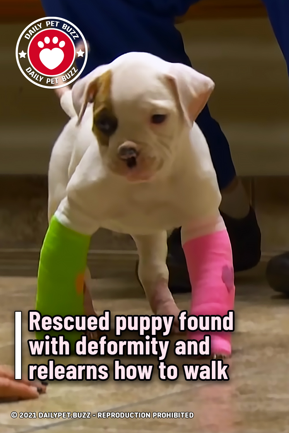 Rescued puppy found with deformity and relearns how to walk
