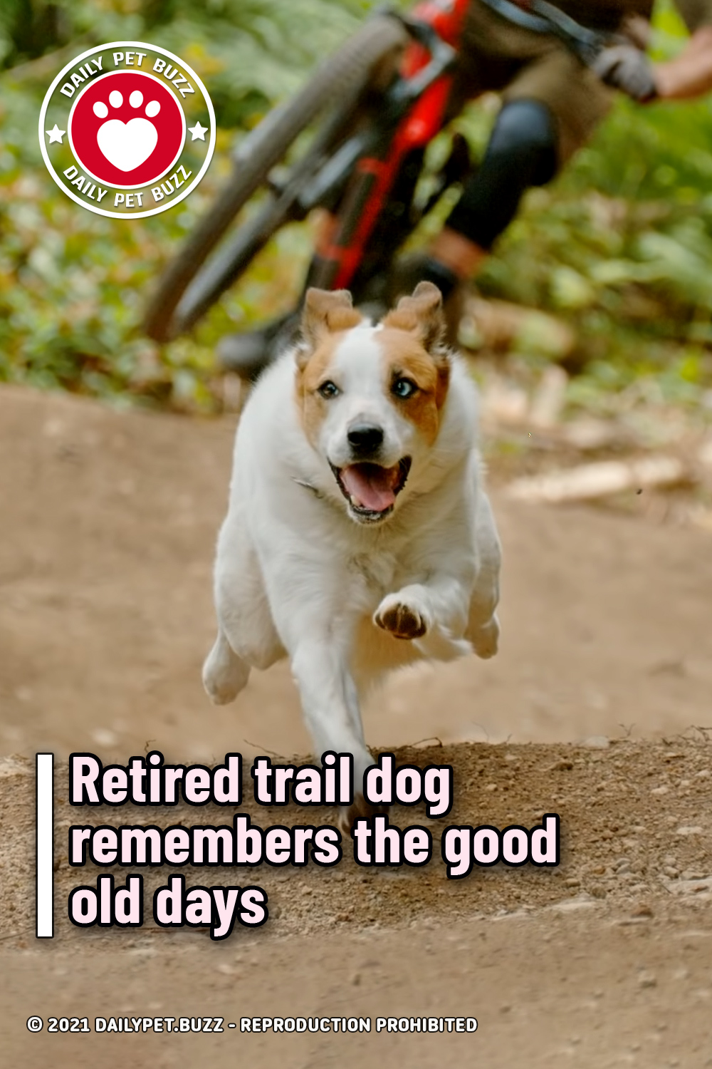 Retired trail dog remembers the good old days