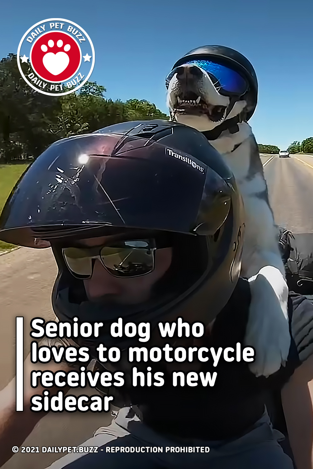 Senior dog who loves to motorcycle receives his new sidecar