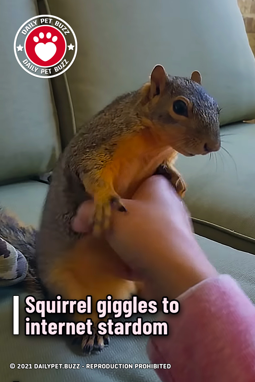Squirrel giggles to internet stardom