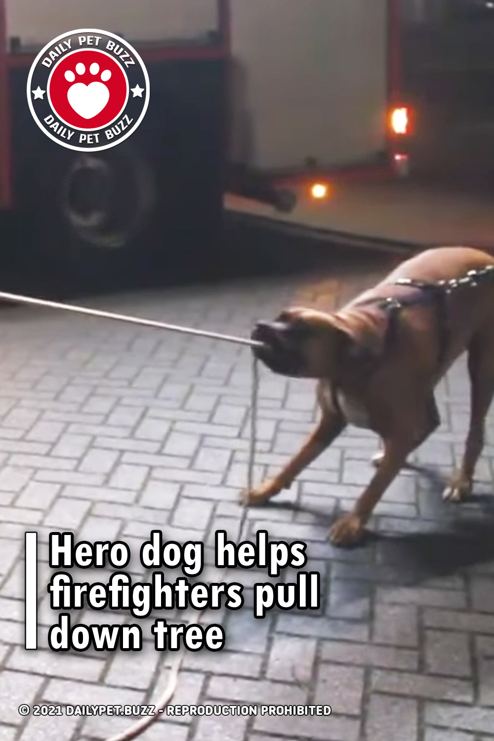 Hero dog helps firefighters pull down tree