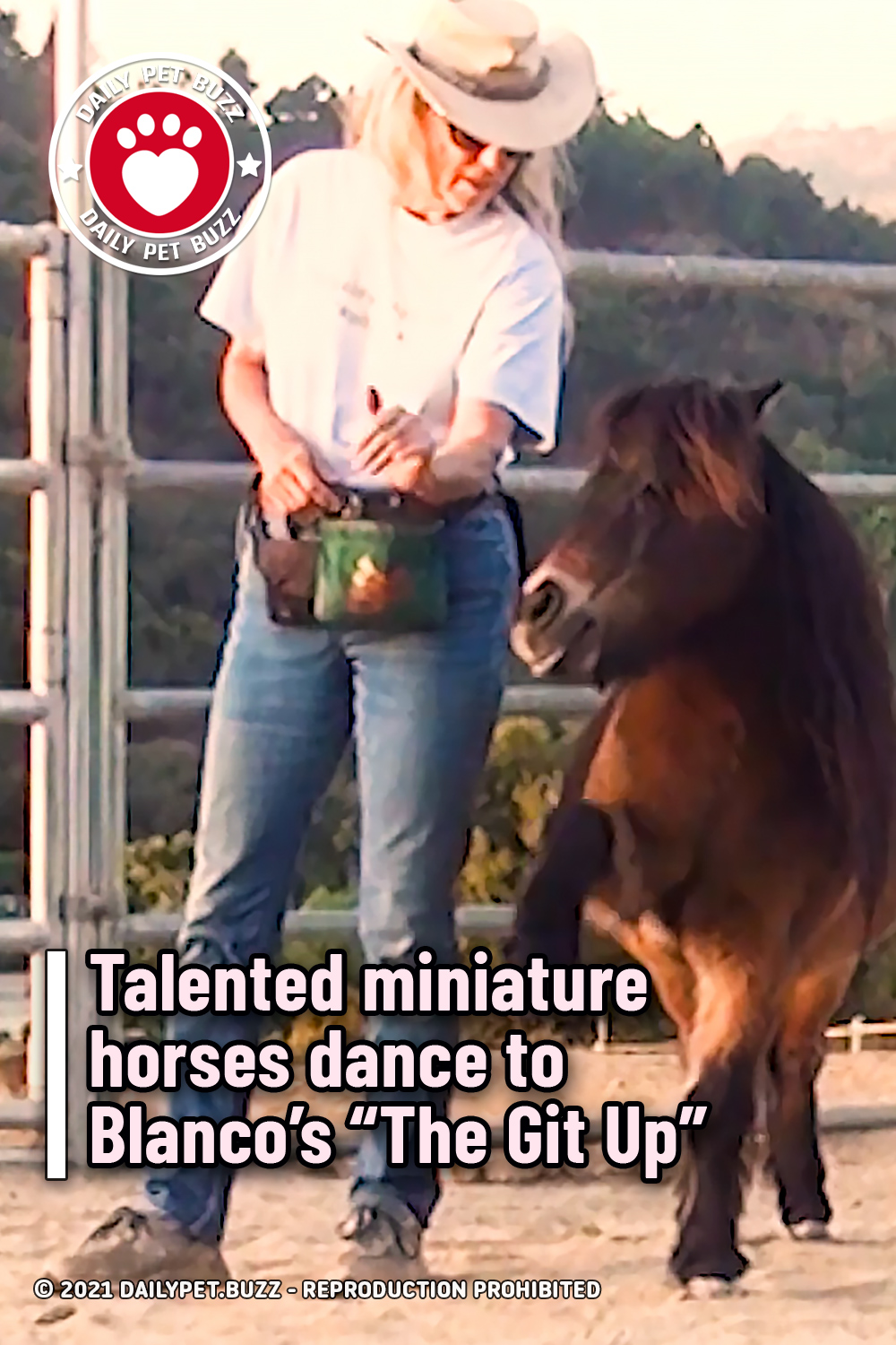 """Talented miniature horses dance to Blanco's """"The Git Up"""""""