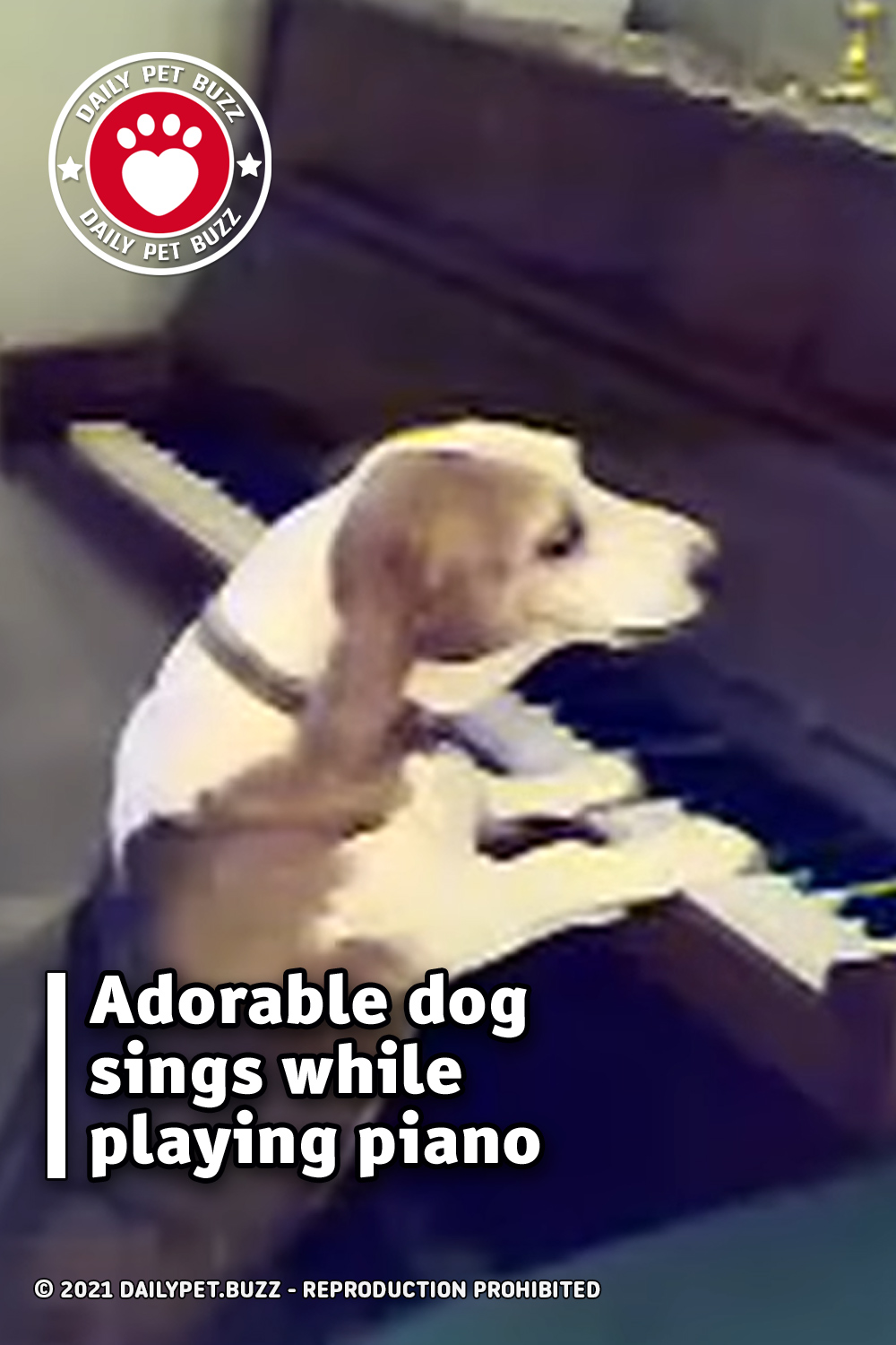 Adorable dog sings while playing piano