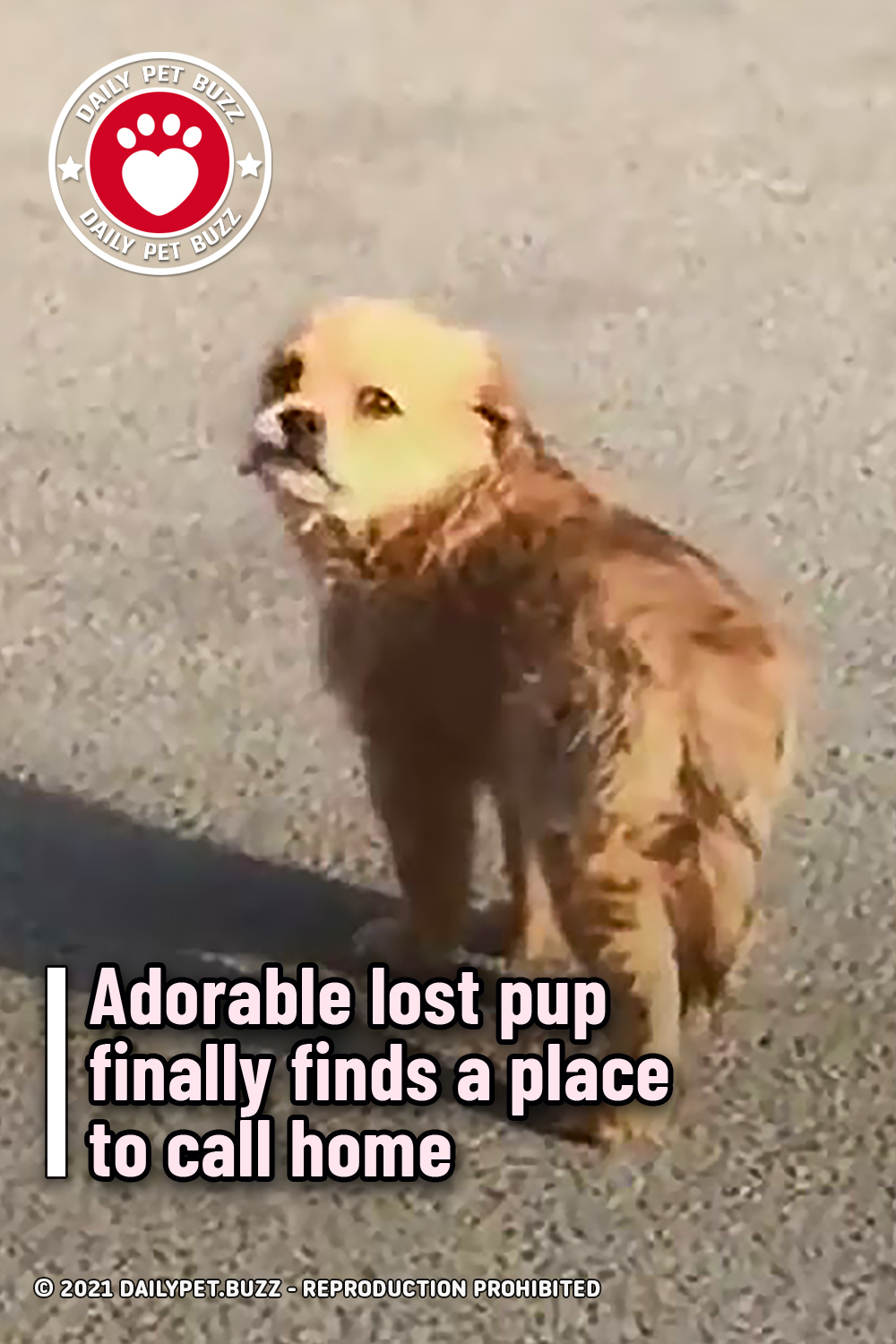 Adorable lost pup finally finds a place to call home