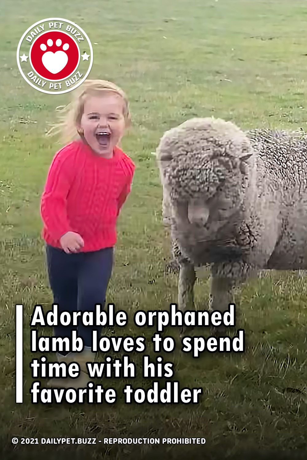 Adorable orphaned lamb loves to spend time with his favorite toddler