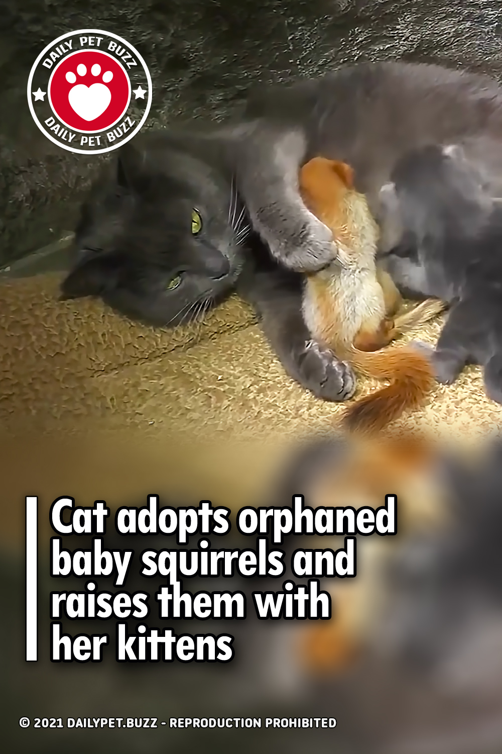 Cat adopts orphaned baby squirrels and raises them with her kittens