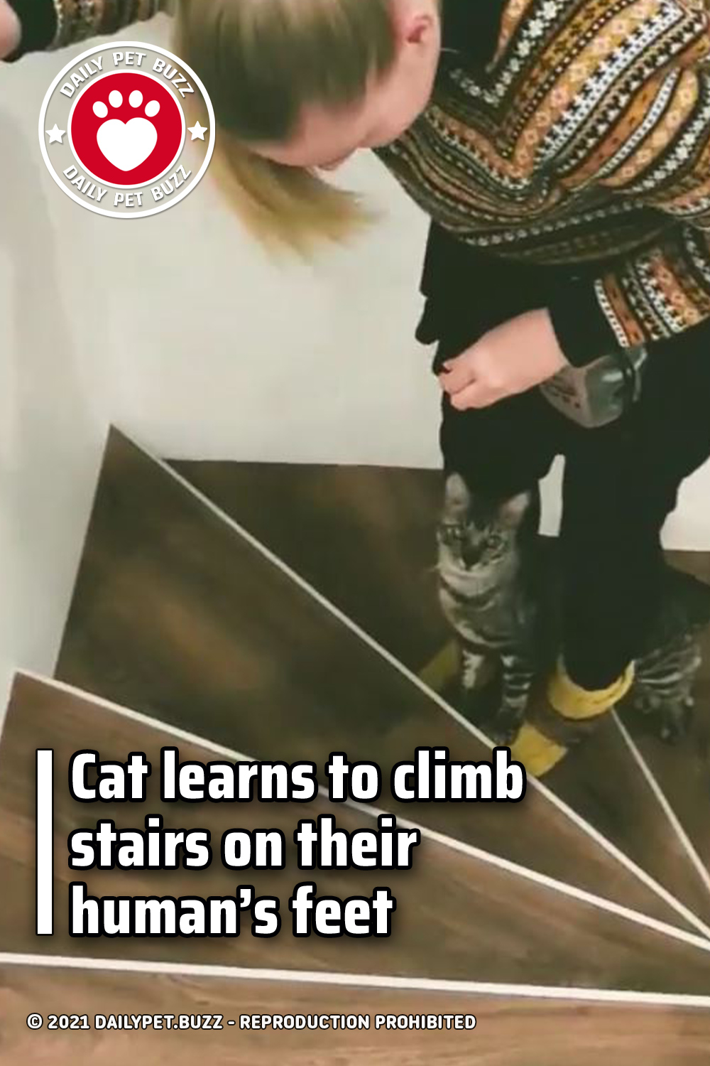 Cat learns to climb stairs on their human's feet