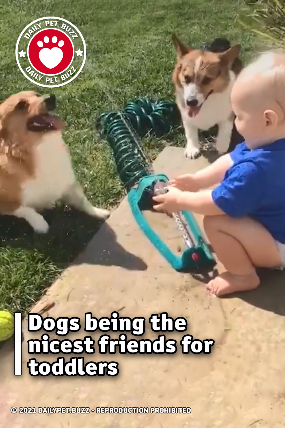 Dogs being the nicest friends for toddlers