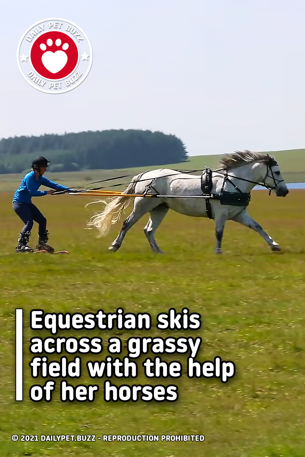 Equestrian skis across a grassy field with the help of her horses