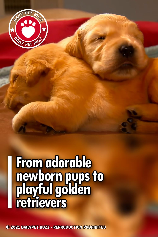 From adorable newborn pups to playful golden retrievers