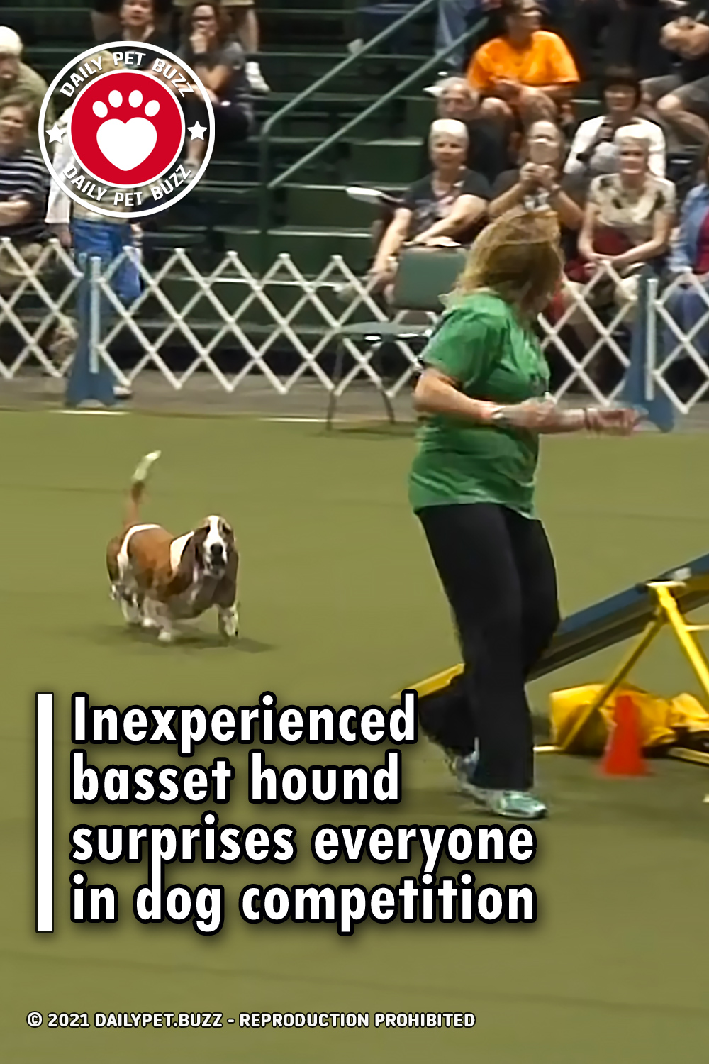 Inexperienced basset hound surprises everyone in dog competition