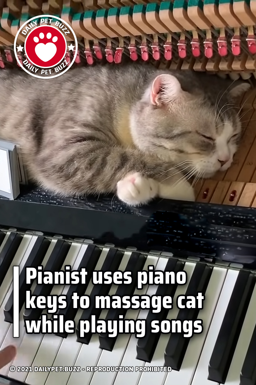 Pianist uses piano keys to massage cat while playing songs