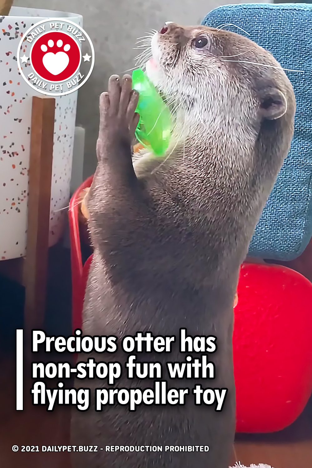 Precious otter has non-stop fun with flying propeller toy