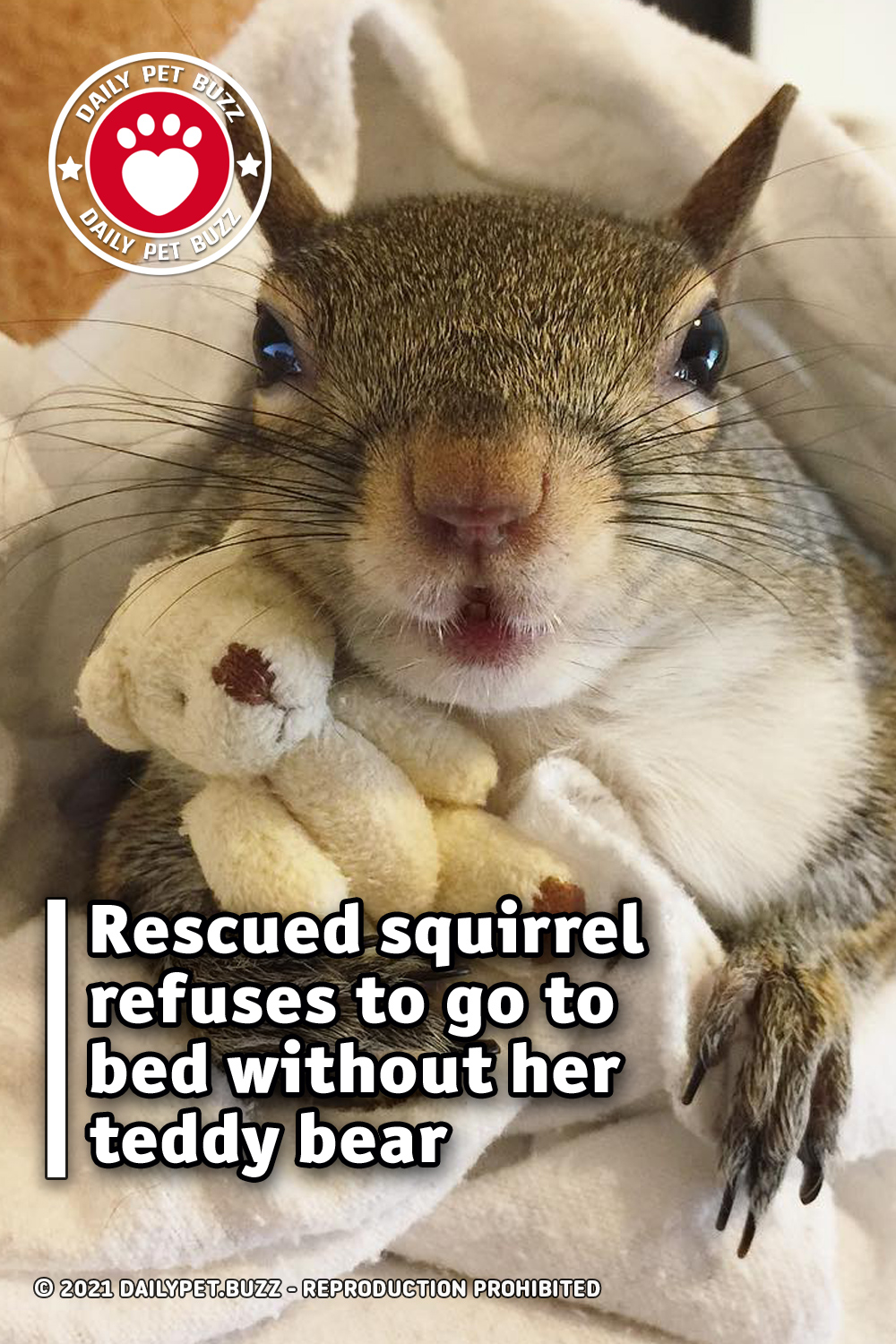 Rescued squirrel refuses to go to bed without her teddy bear