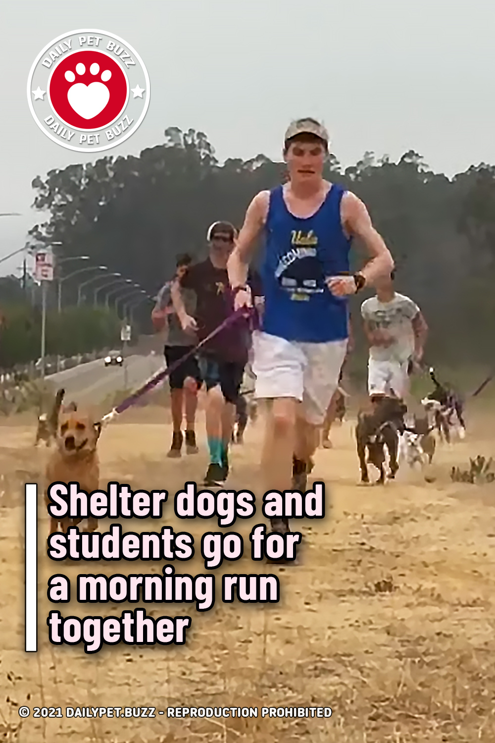 Shelter dogs and students go for a morning run together