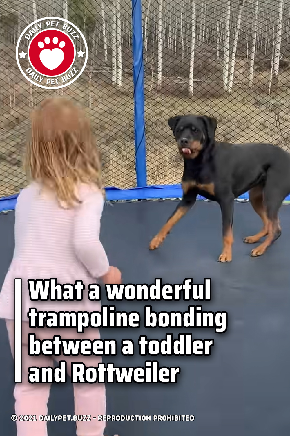 What a wonderful trampoline bonding between a toddler and Rottweiler