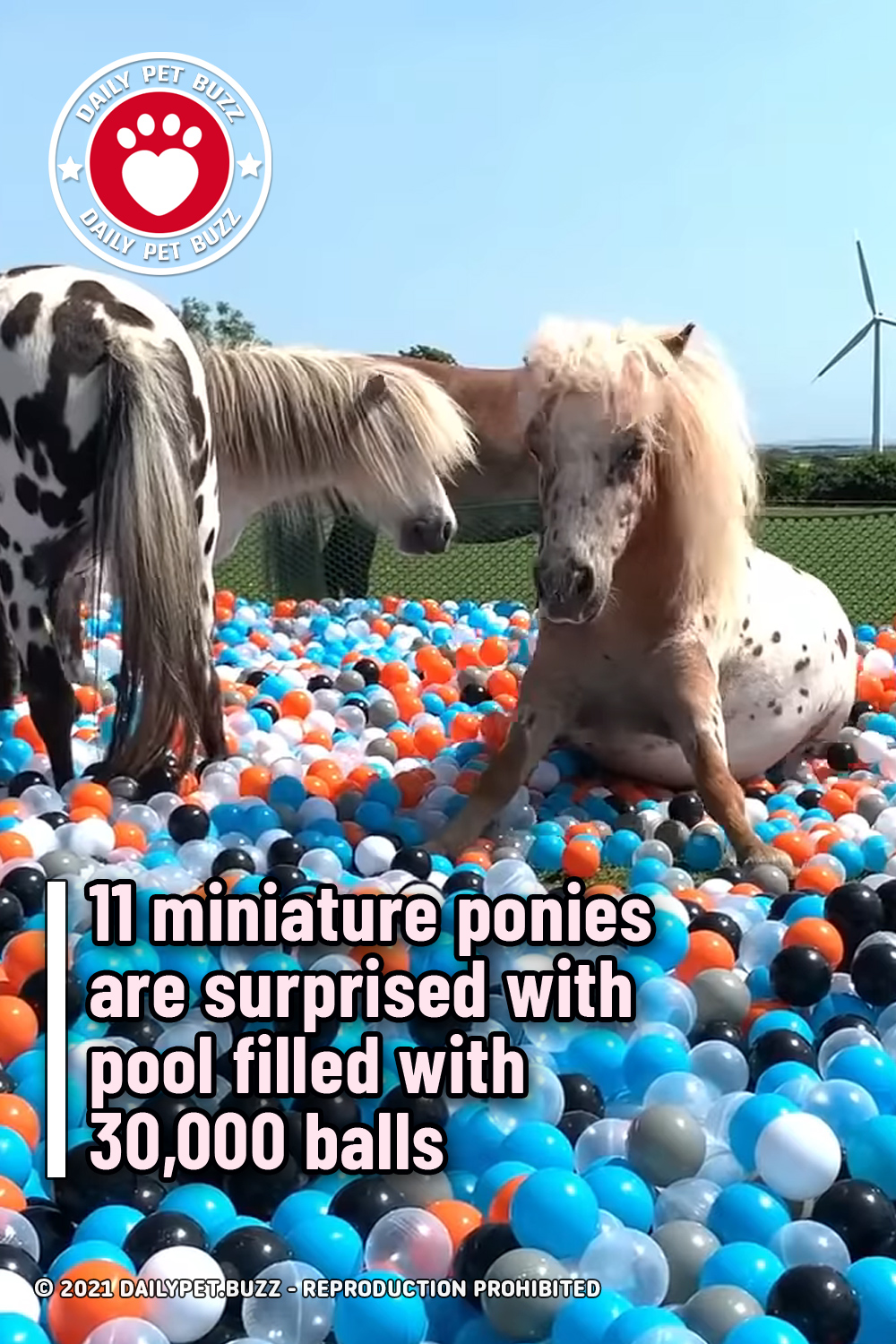 11 miniature ponies are surprised with pool filled with 30,000 balls
