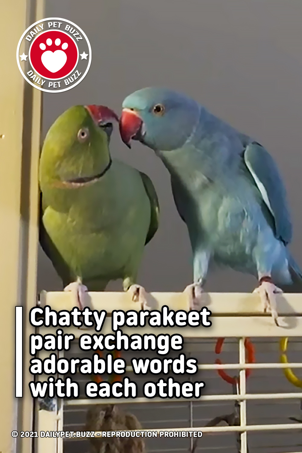 Chatty parakeet pair exchange adorable words with each other