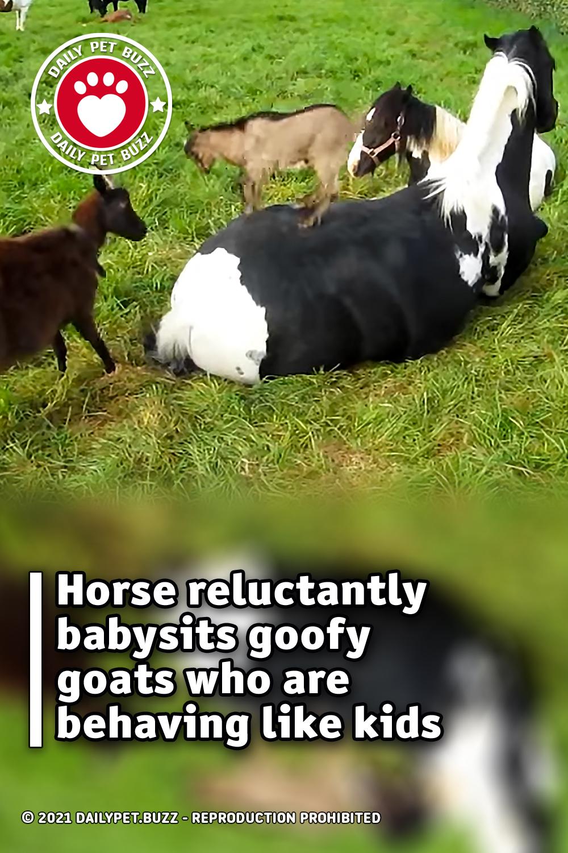 Horse reluctantly babysits goofy goats who are behaving like kids