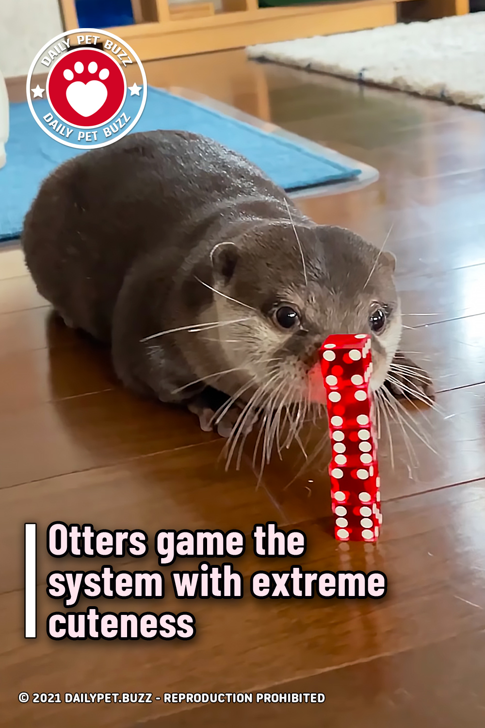 Otters game the system with extreme cuteness