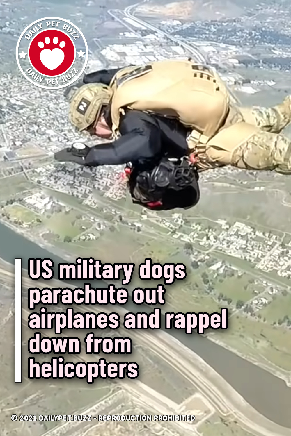 US military dogs parachute out airplanes and rappel down from helicopters