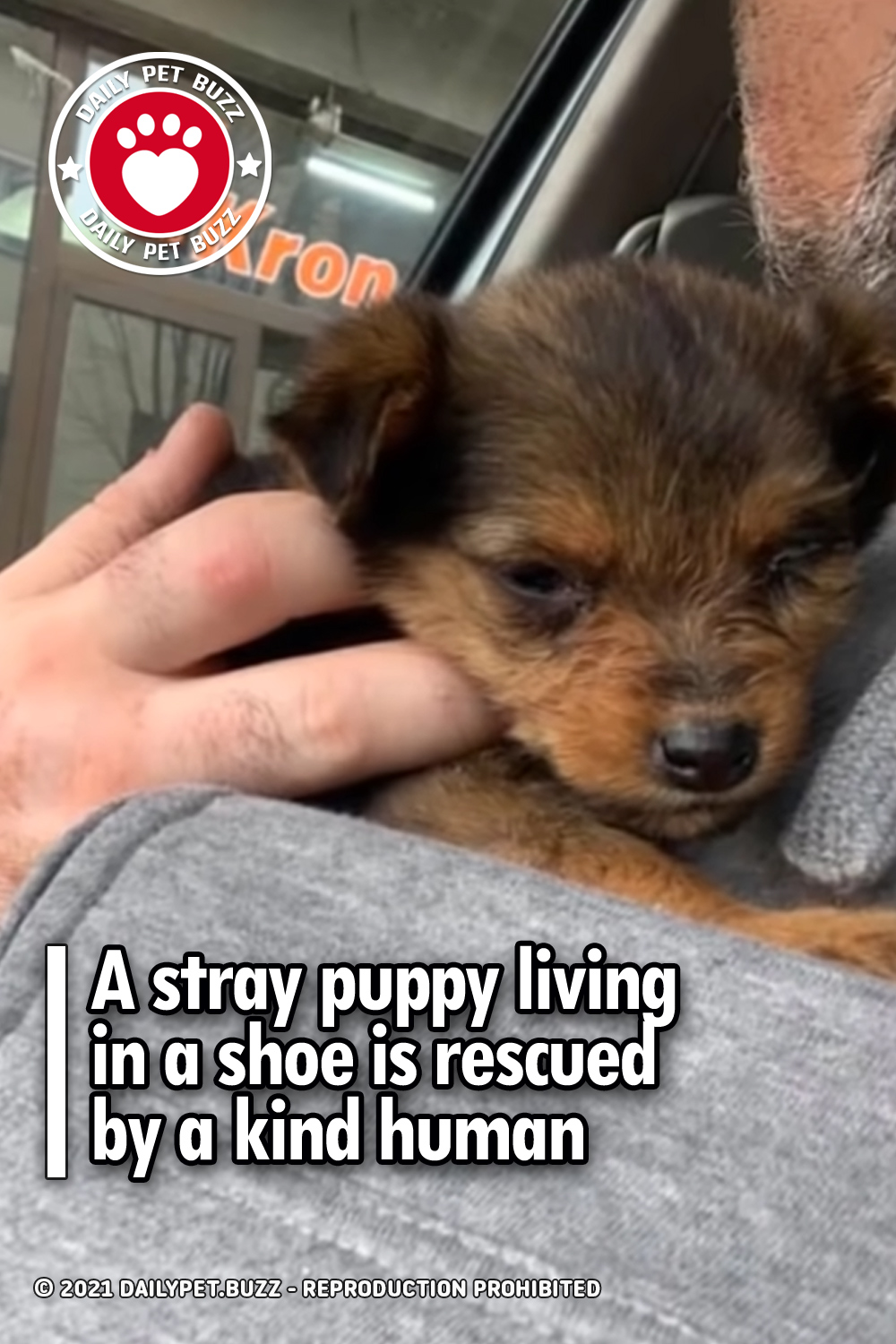 A stray puppy living in a shoe is rescued by a kind human
