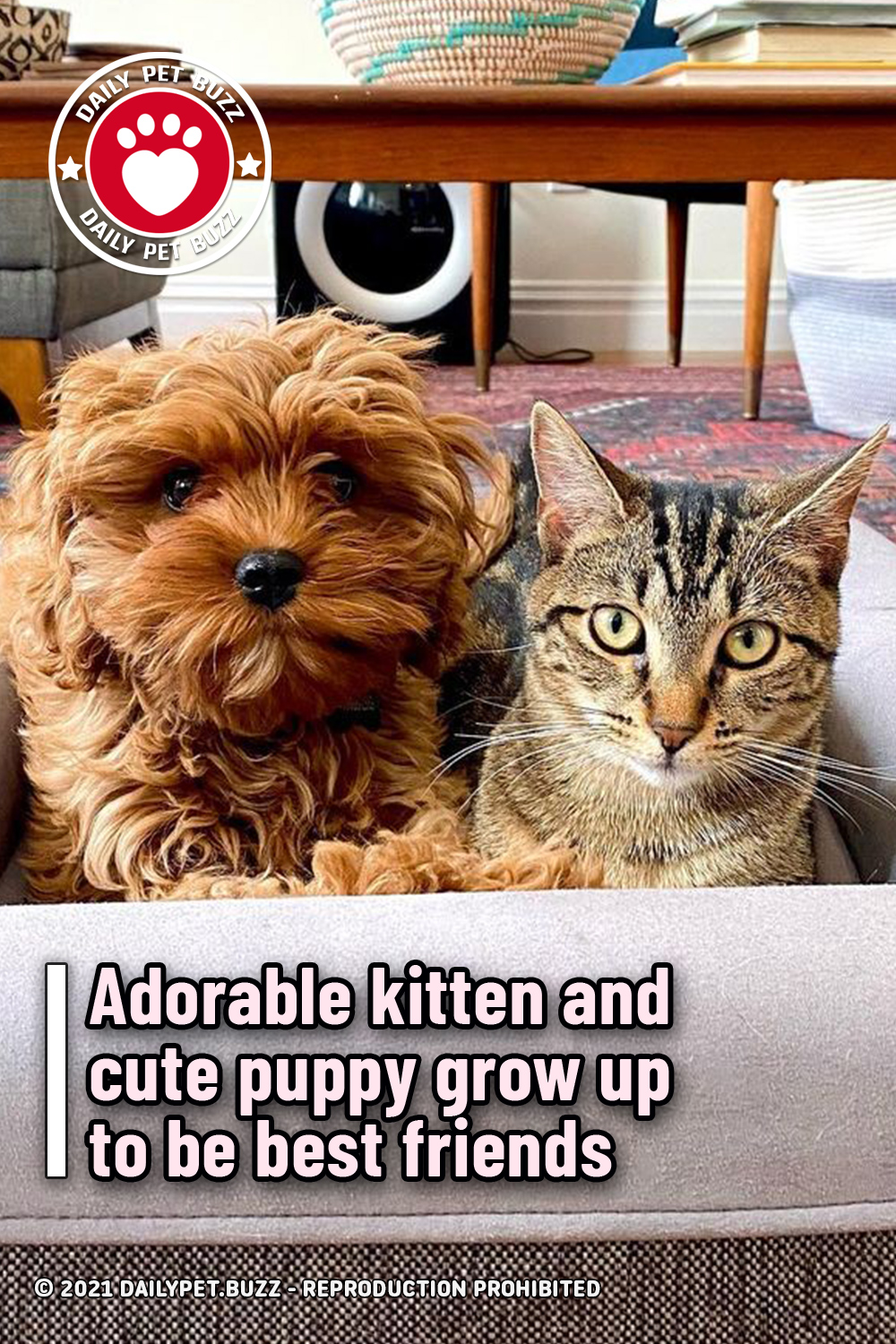 Adorable kitten and cute puppy grow up to be best friends
