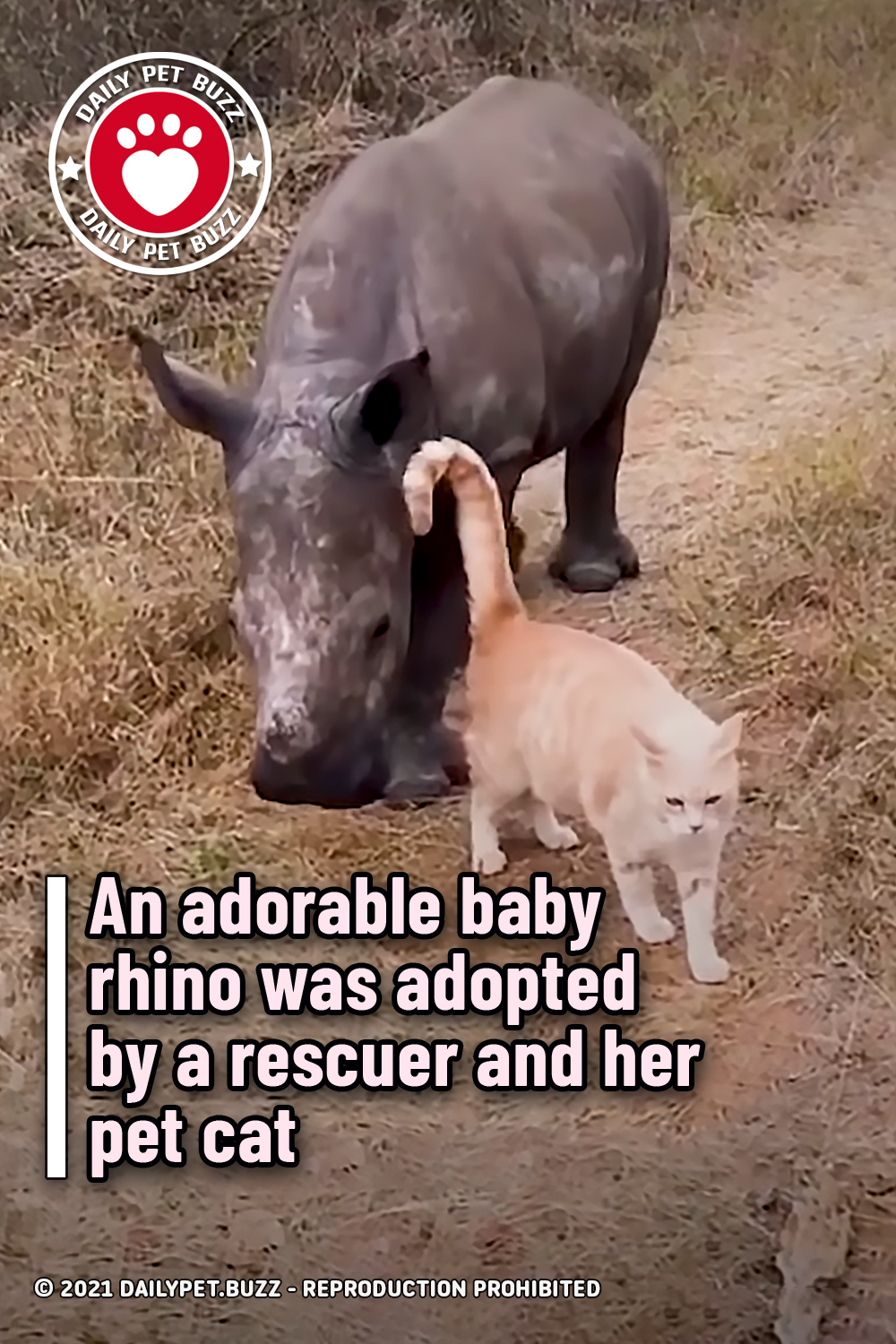 An adorable baby rhino was adopted by a rescuer and her pet cat