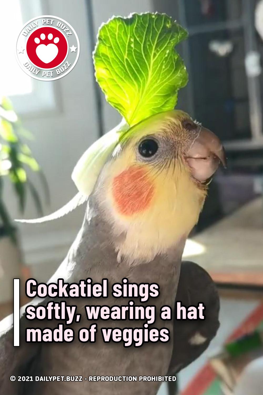 Cockatiel sings softly, wearing a hat made of veggies