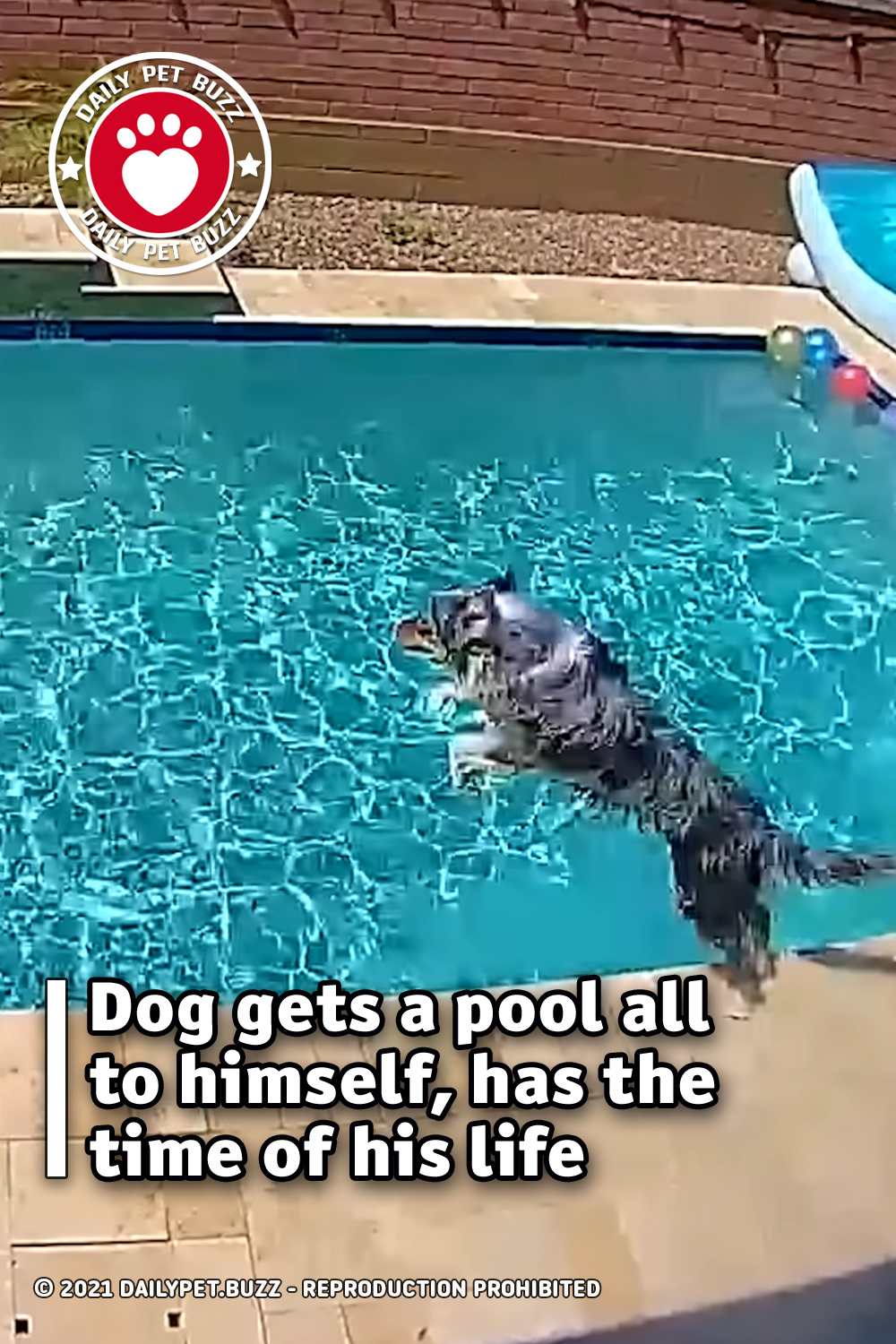 Dog gets a pool all to himself, has the time of his life