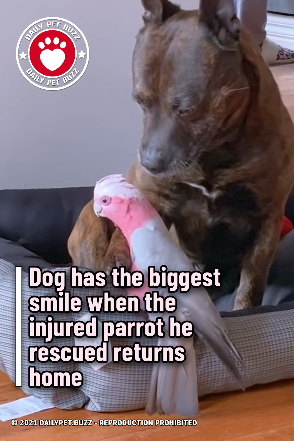 Dog has the biggest smile when the injured parrot he rescued returns home