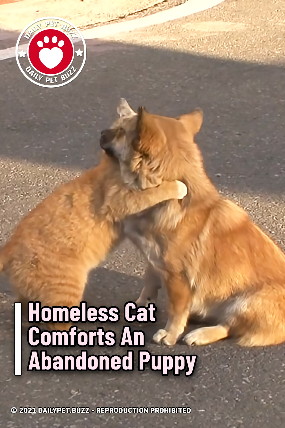 Homeless Cat Comforts An Abandoned Puppy