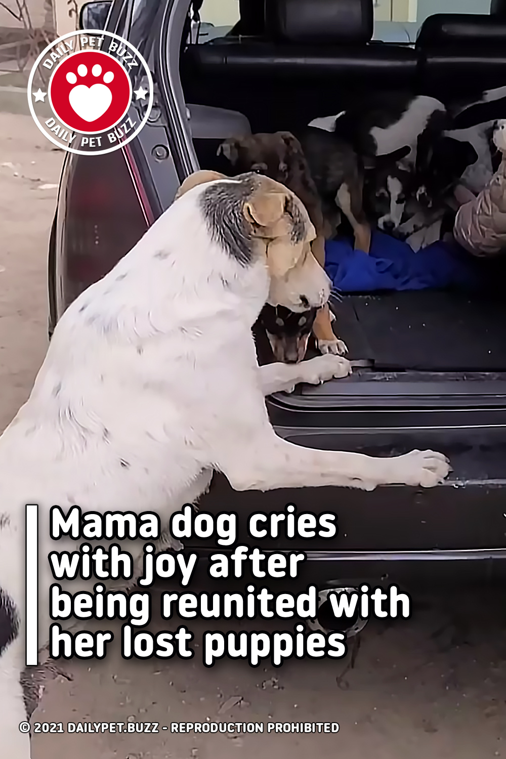 Mama dog cries with joy after being reunited with her lost puppies
