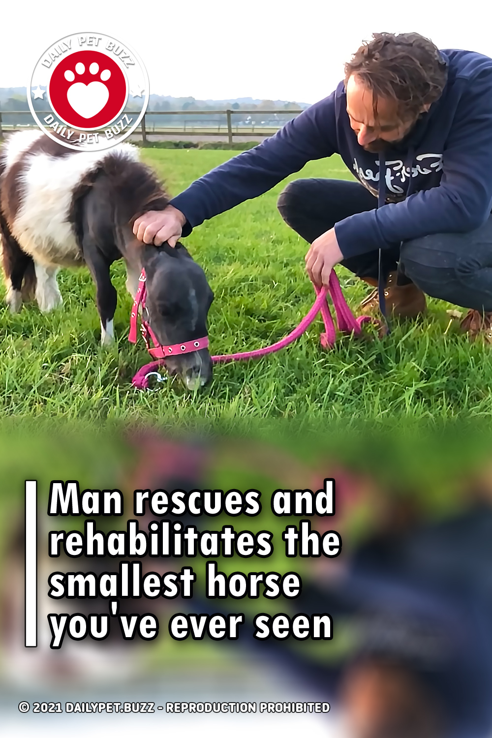 Man rescues and rehabilitates the smallest horse you\'ve ever seen