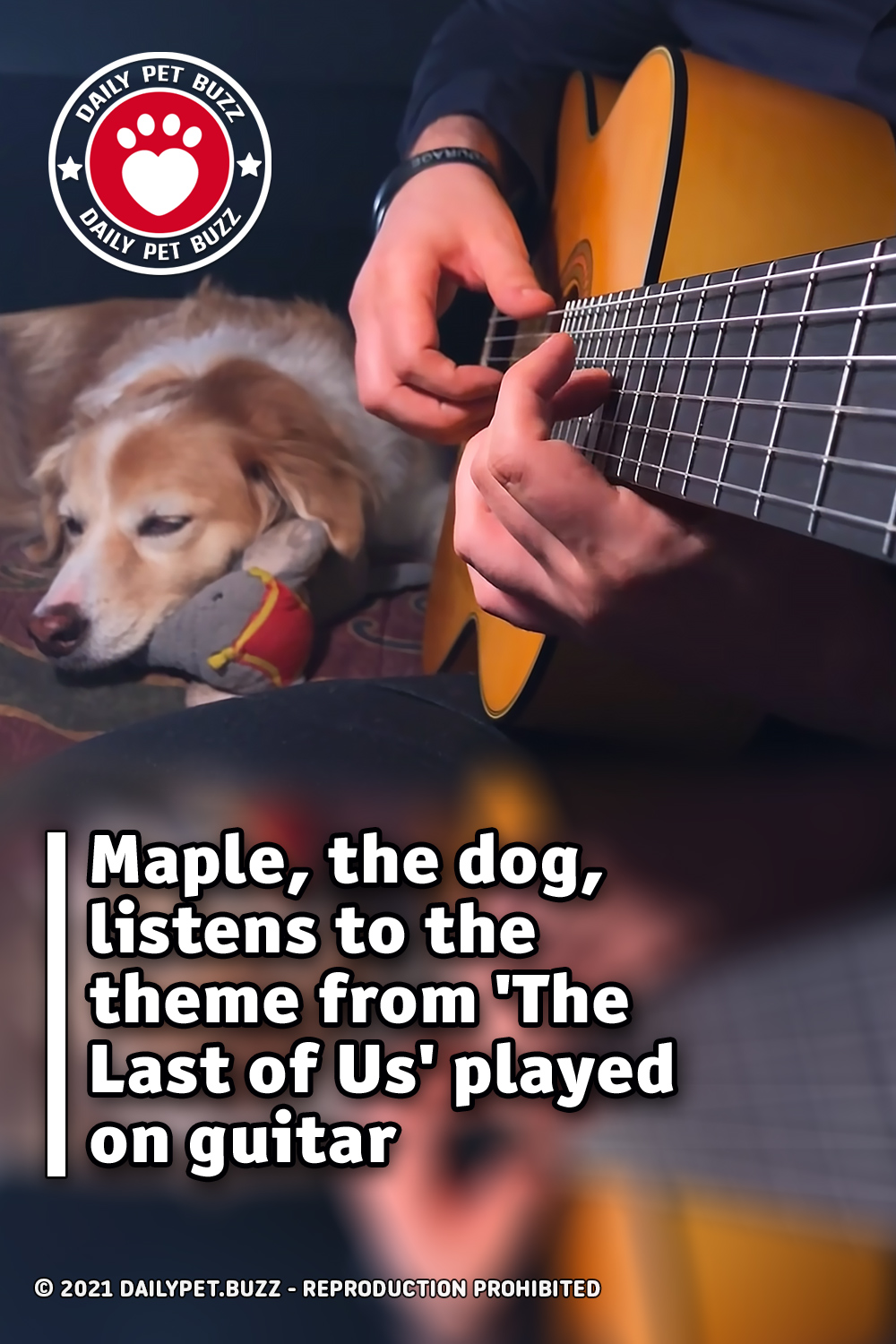 Maple, the dog, listens to the theme from \'The Last of Us\' played on guitar