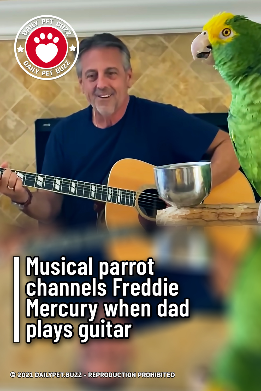 Musical parrot channels Freddie Mercury when dad plays guitar