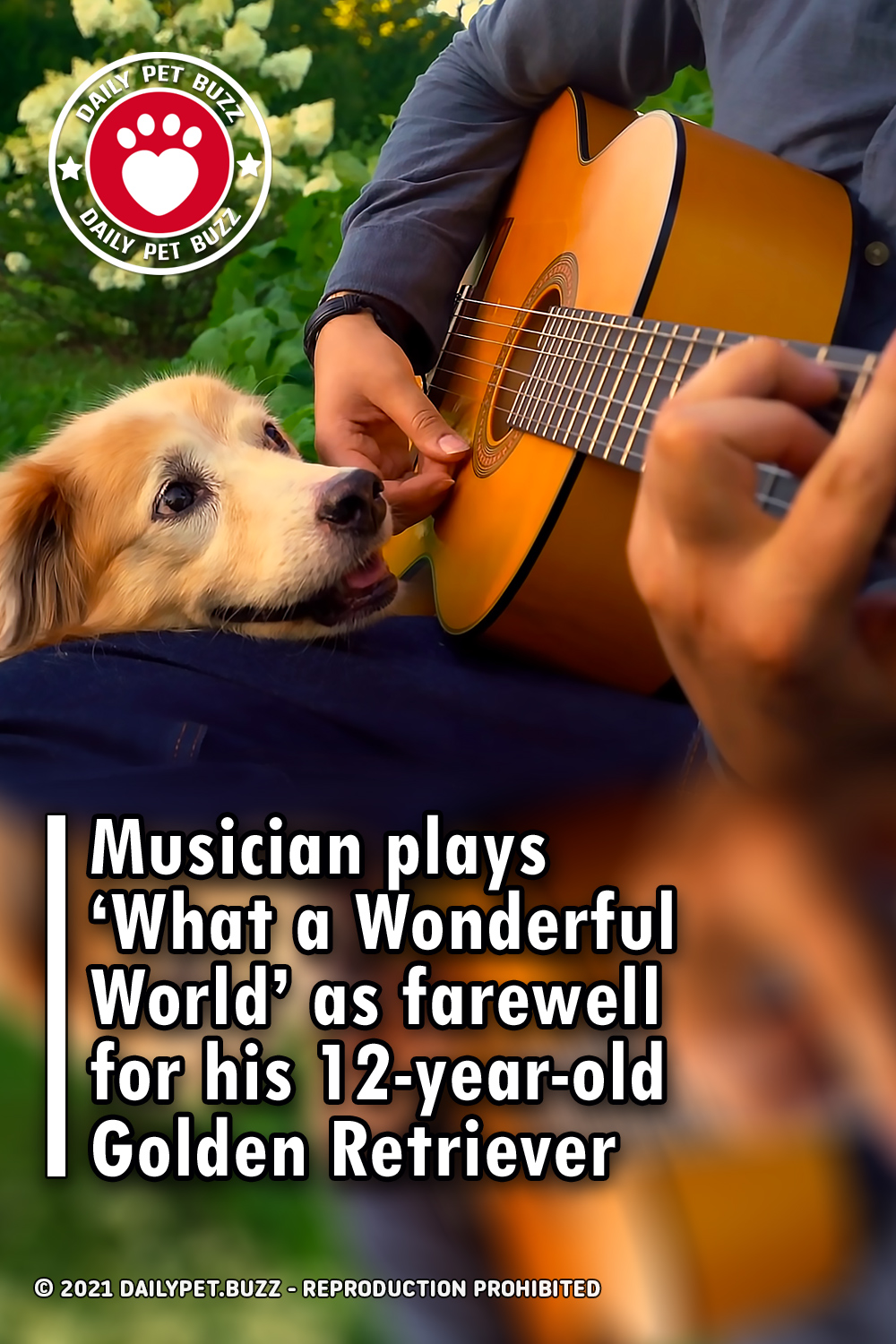 Musician plays 'What a Wonderful World' as farewell for his 12-year-old Golden Retriever