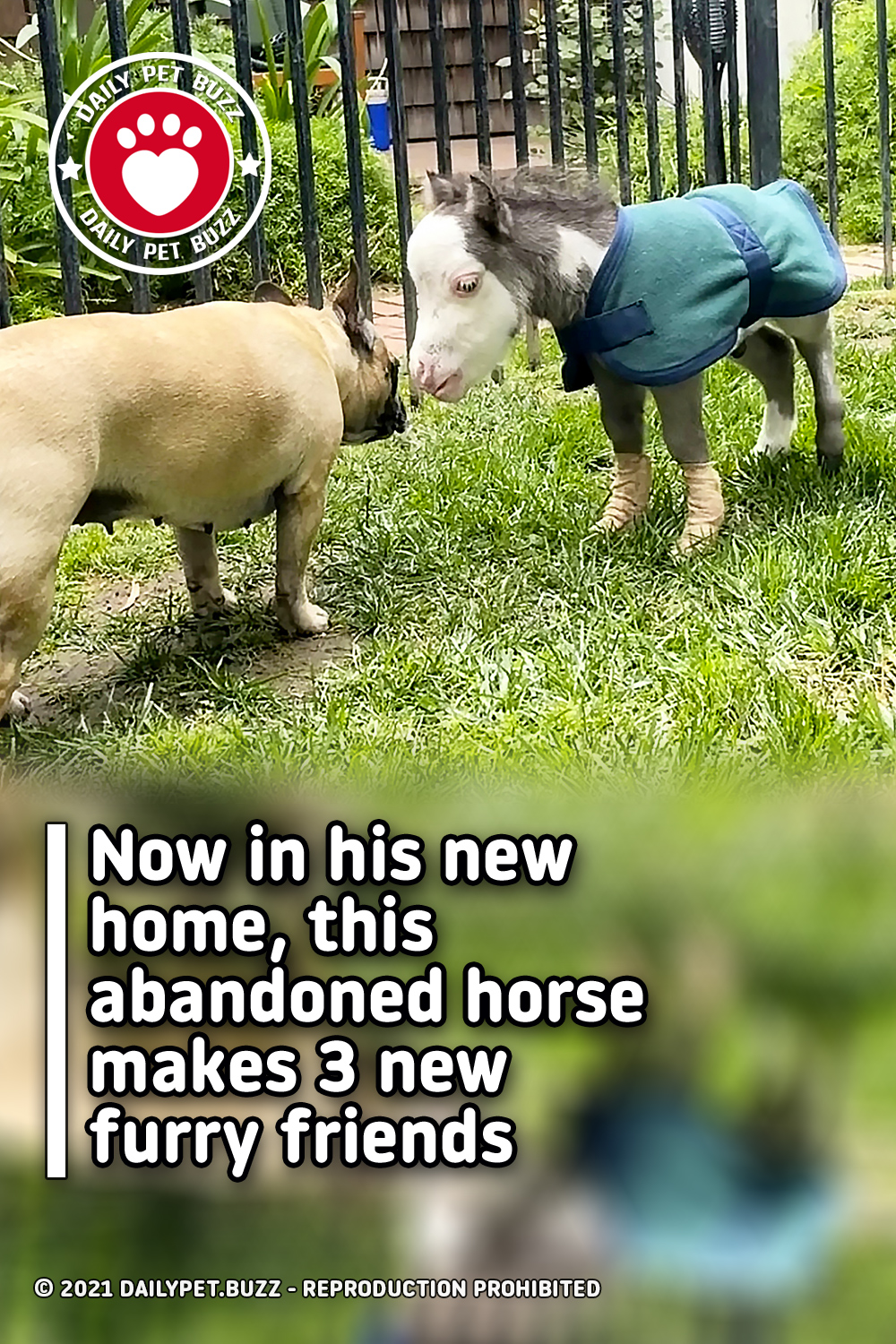 Now in his new home, this abandoned horse makes 3 new furry friends