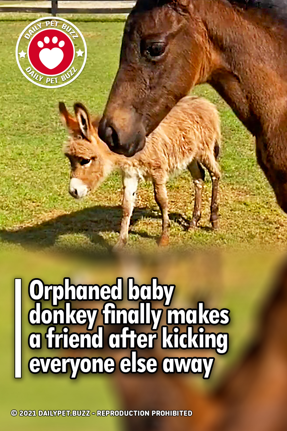 Orphaned baby donkey finally makes a friend after kicking everyone else away