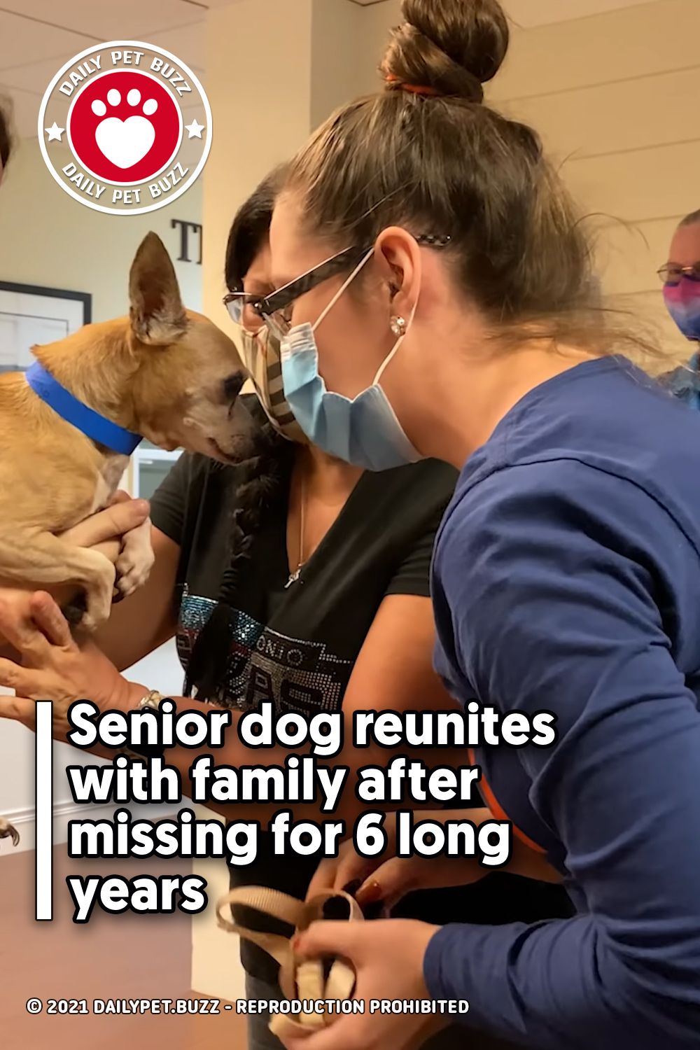 Senior dog reunites with family after missing for 6 long years